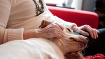 Aussies must be wary of the guidelines when moving into a retirement village with a pet. Source: Getty