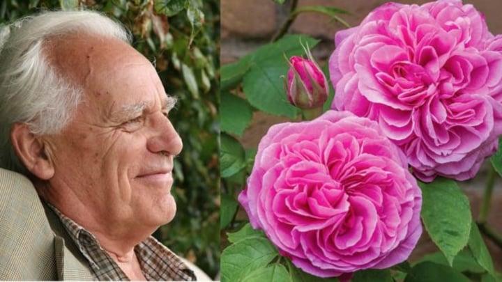 In Memoriam Photos Of David Austin S Most Beautiful Roses