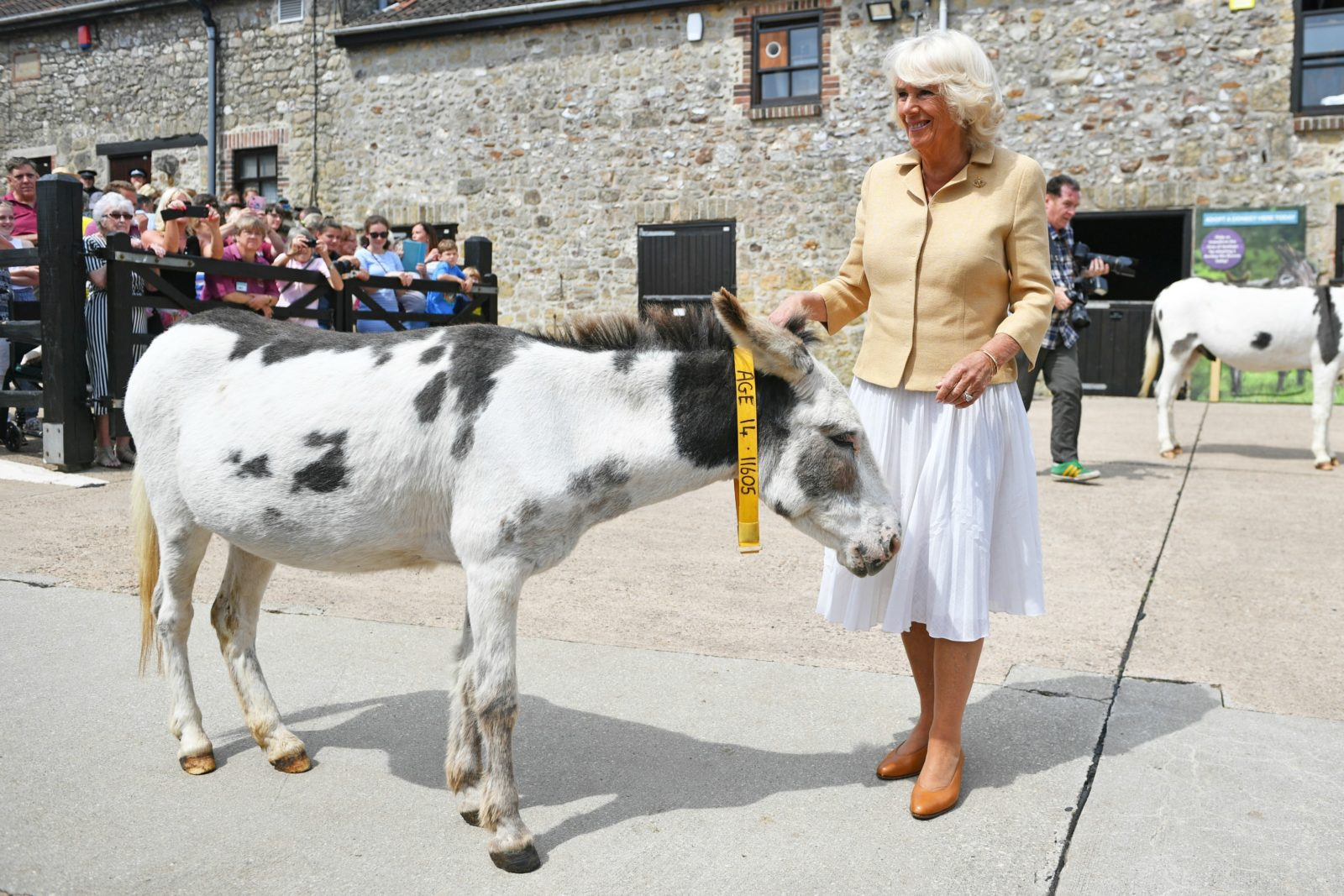 The Duchess of Cornwall during her visit to The Donkey Sanctuary. Source: Getty.
