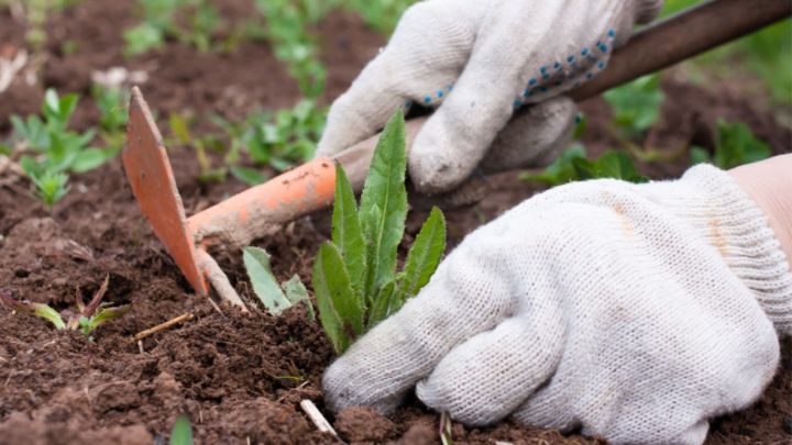 From garden to plate! The trend of growing your own veggies is making a comeback