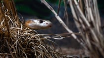Simple tips to keep snakes away from your home this summer. Source: Getty Images