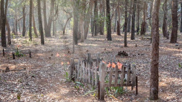 Peel Island cemetery