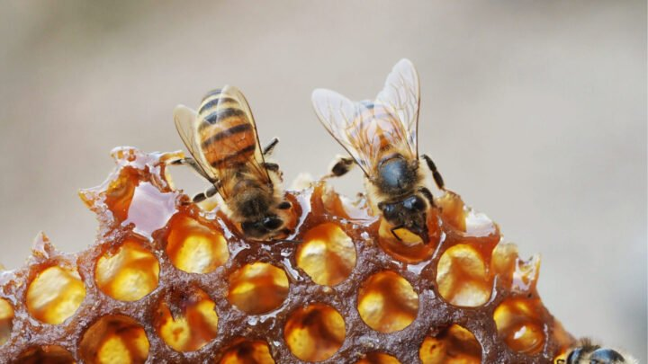 This community writer learned the hard-way when it comes to beekeeping. Source: Getty.