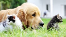 With the weather warming up your dogs and cats will be spending more time outside, which means they're at greater risk of getting fleas or ticks! Source: Getty