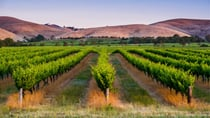 Enjoy the best of South Australia with a Maggie Beer hamper. Source: Getty