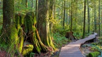 Ian takes us on a tour through Vancouver's stunning Lynn Canyon. Source: Getty