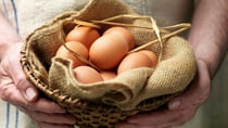 When it comes to investments, you'd be wise not to put all your eggs in one basket.