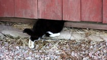 Sue's cat has a habit of getting into mischief. (stock image) Source: Getty