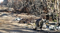 Kangaroo Island was hit hard in the 2019/2020 bushfires, but you can help the community get back on its feet with a holiday next year. Source: Getty