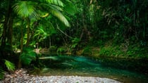 The famous Daintree Rainforest is one of the top places recommended for Aussies to visit this year. Source: Getty