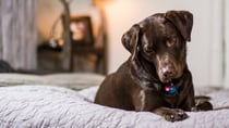A grandmother wonders if she's alone in letting her dog sleep on the bed. Source: Pexels